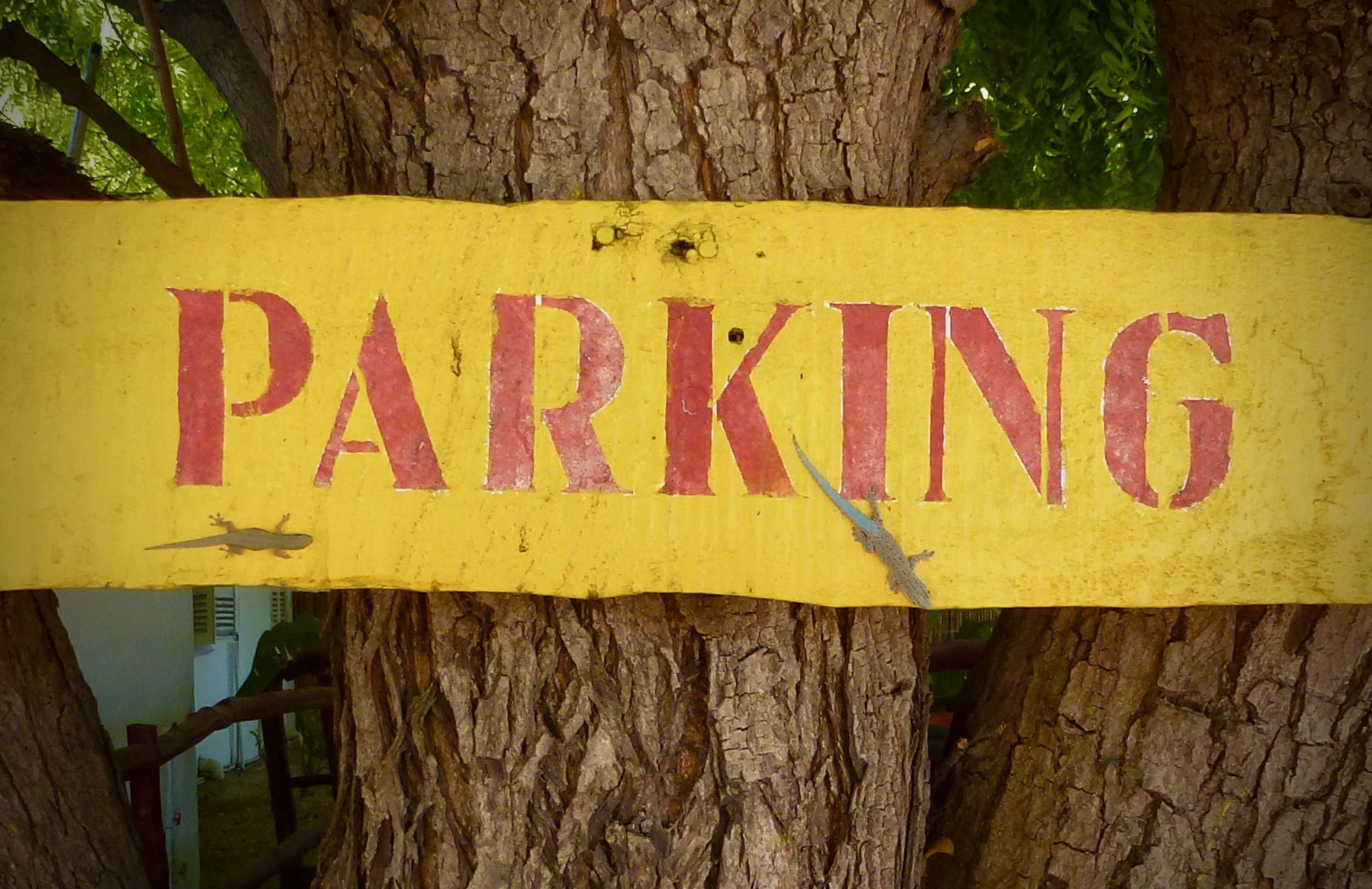 Two species of day geckos sharing this parking sign in Mangily: Phelsuma mutabilis and Phelsuma modesta.