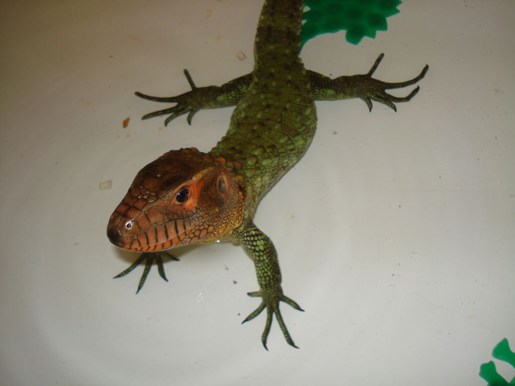 Here's Turok back in 2010 when he first arrived at Lick Your eyeballs.