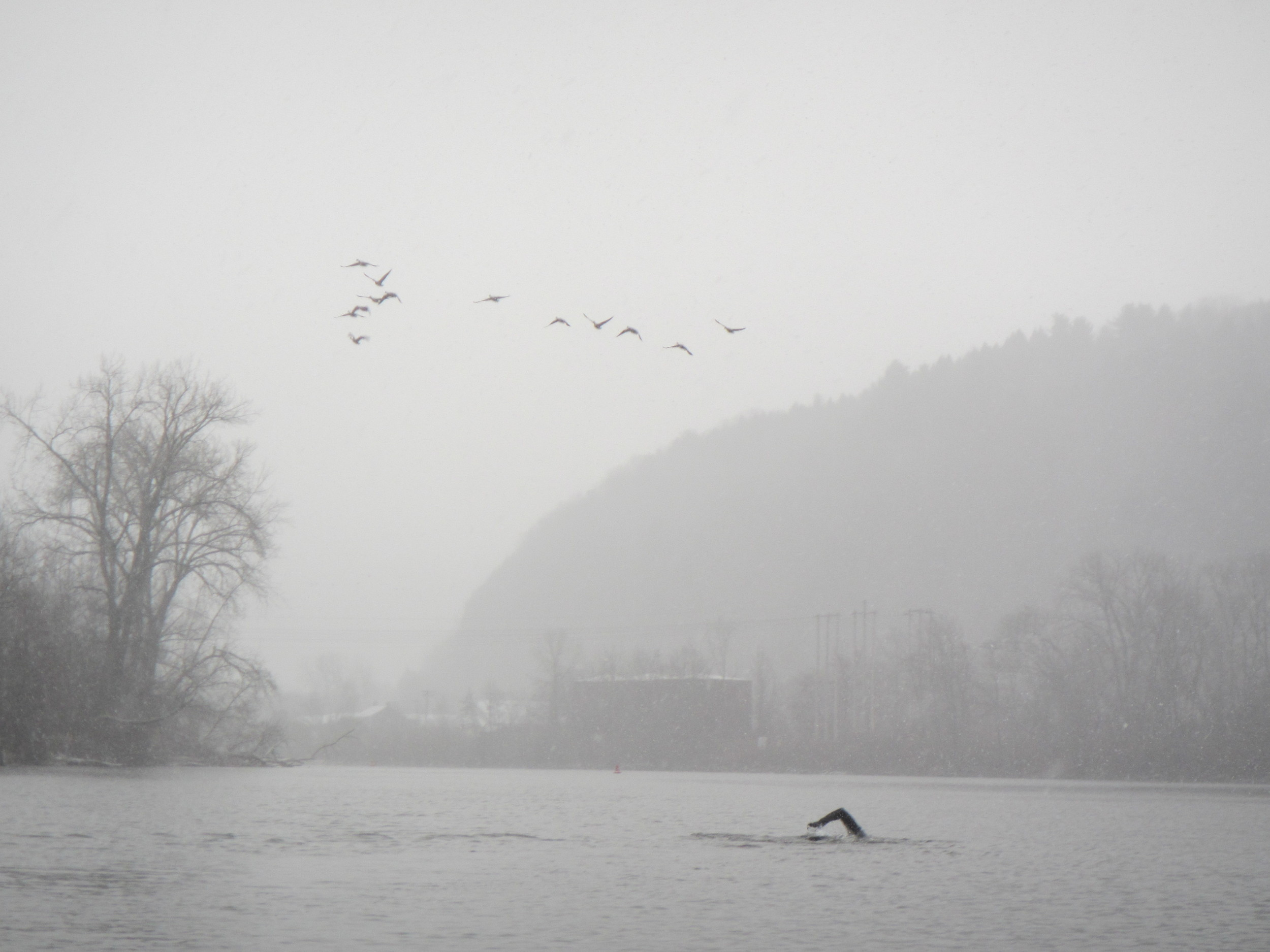 That's me, swimming into Little Falls, NY in a snowstorm, in 36 degree water. I love this river, and I will keep going until I swim its entire length.