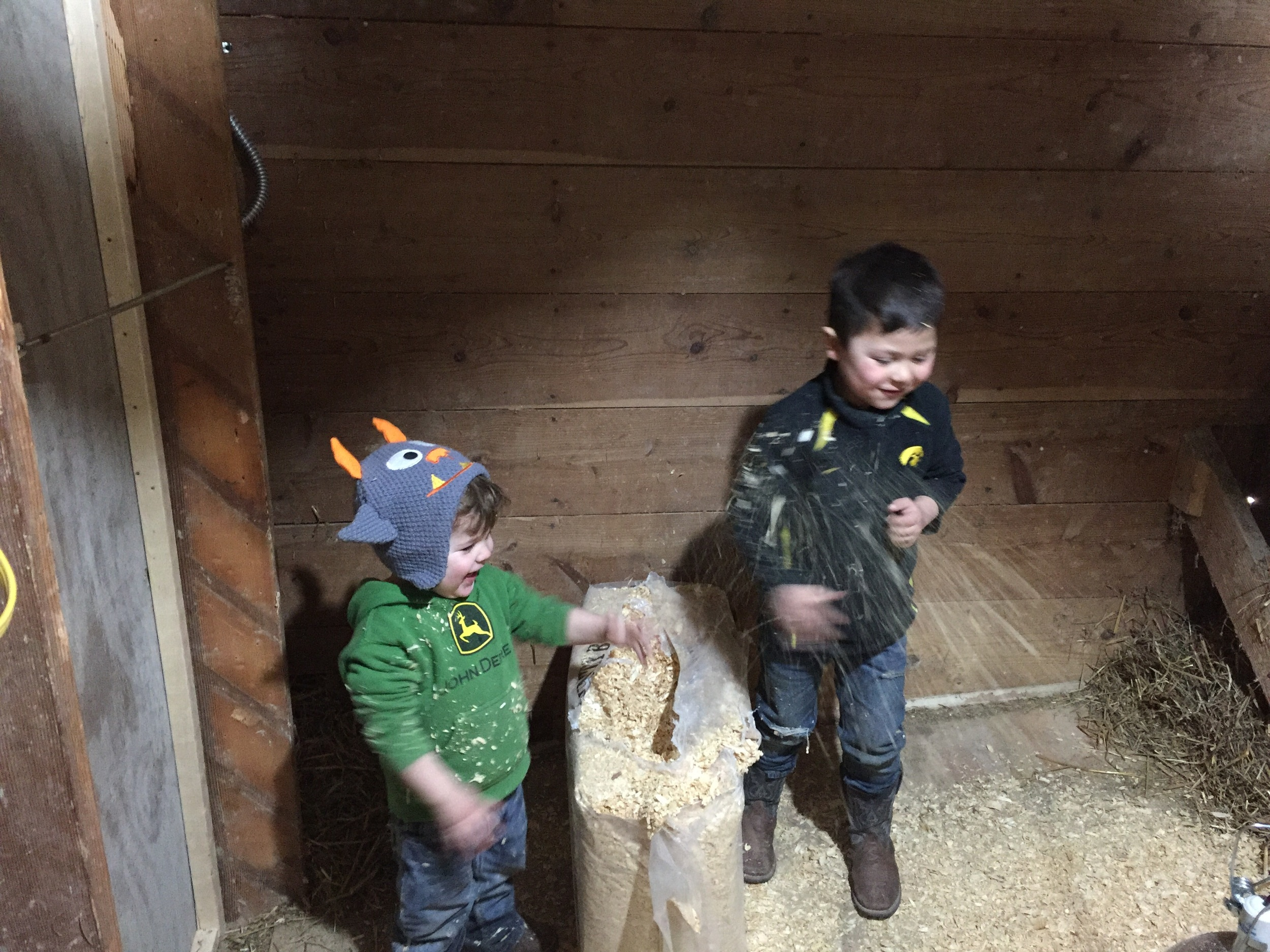Laid down some Coumtry Boy pine shavings. Placed straw along the edges of the walls of the barn to prevent drafts creeping through.