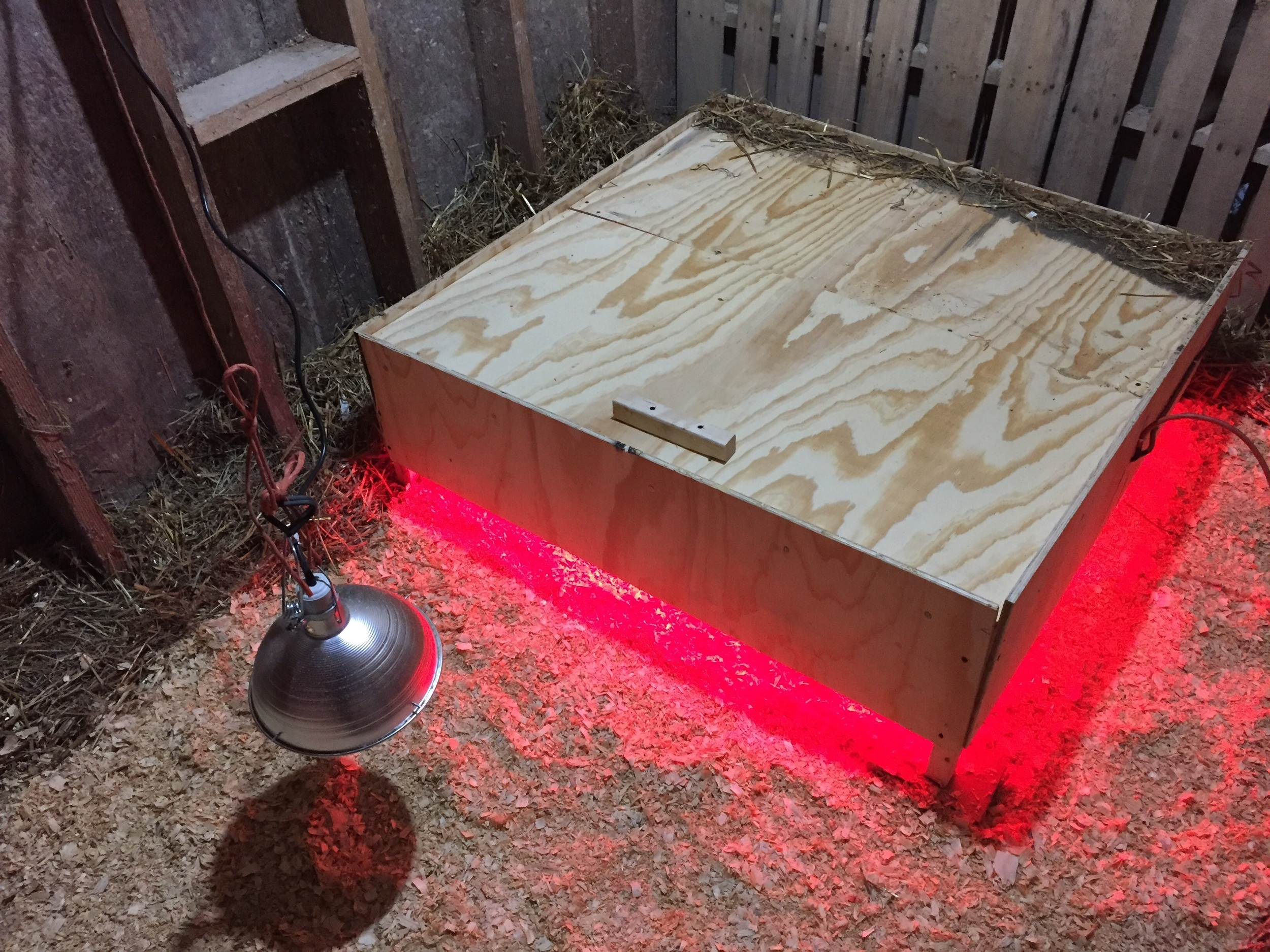 Ohio Brooder, straw around border to prevent drafts, Country Boy pine shavings.