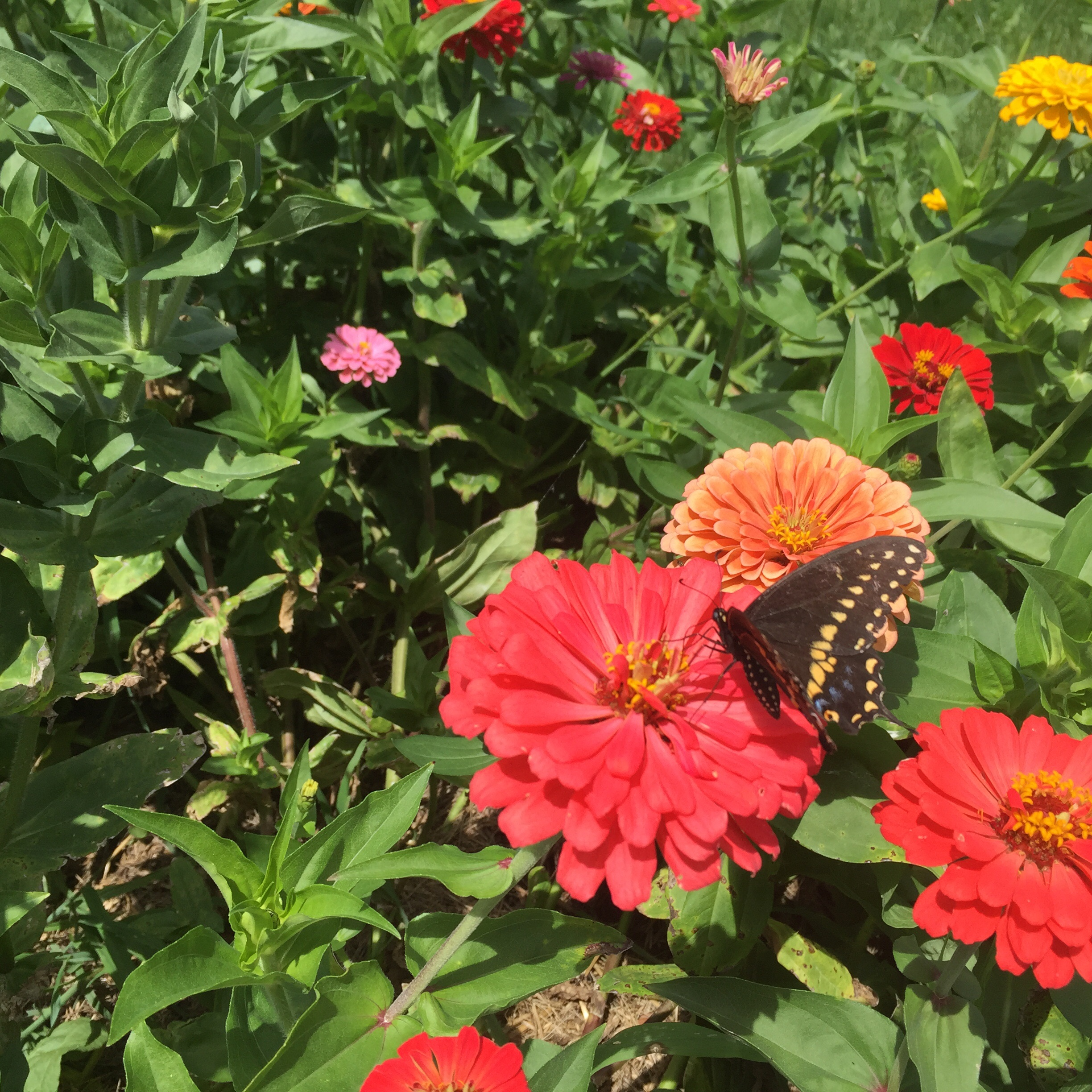Flowers help attract pollinators to the garden and also add a lot of color.