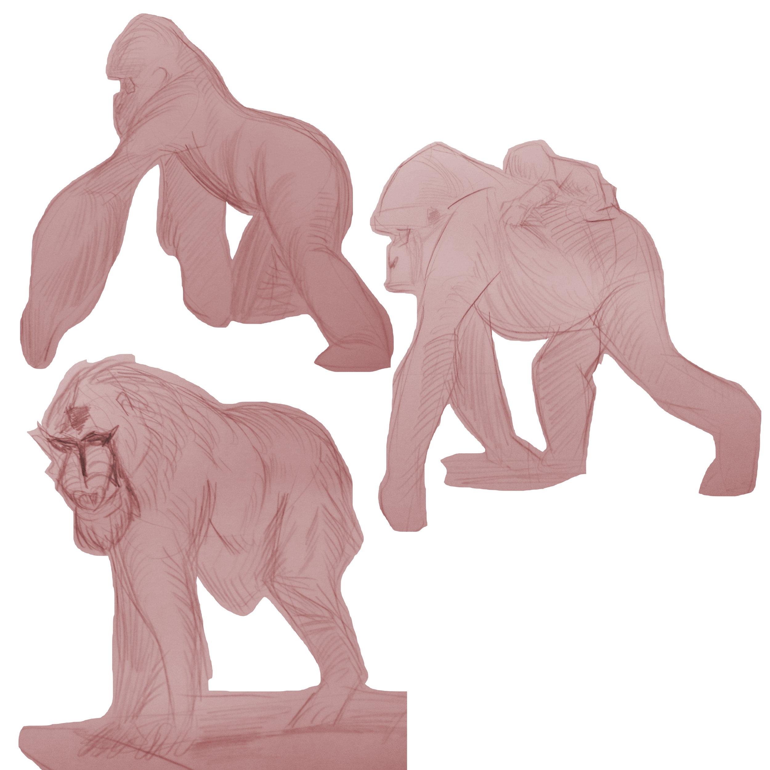 Ape drawings study