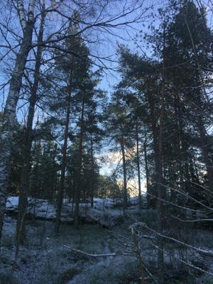 Helsinki Dec 6 (39 of 47).jpg