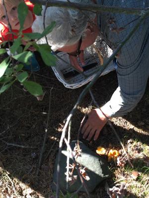 Learning to hunt for kantereller