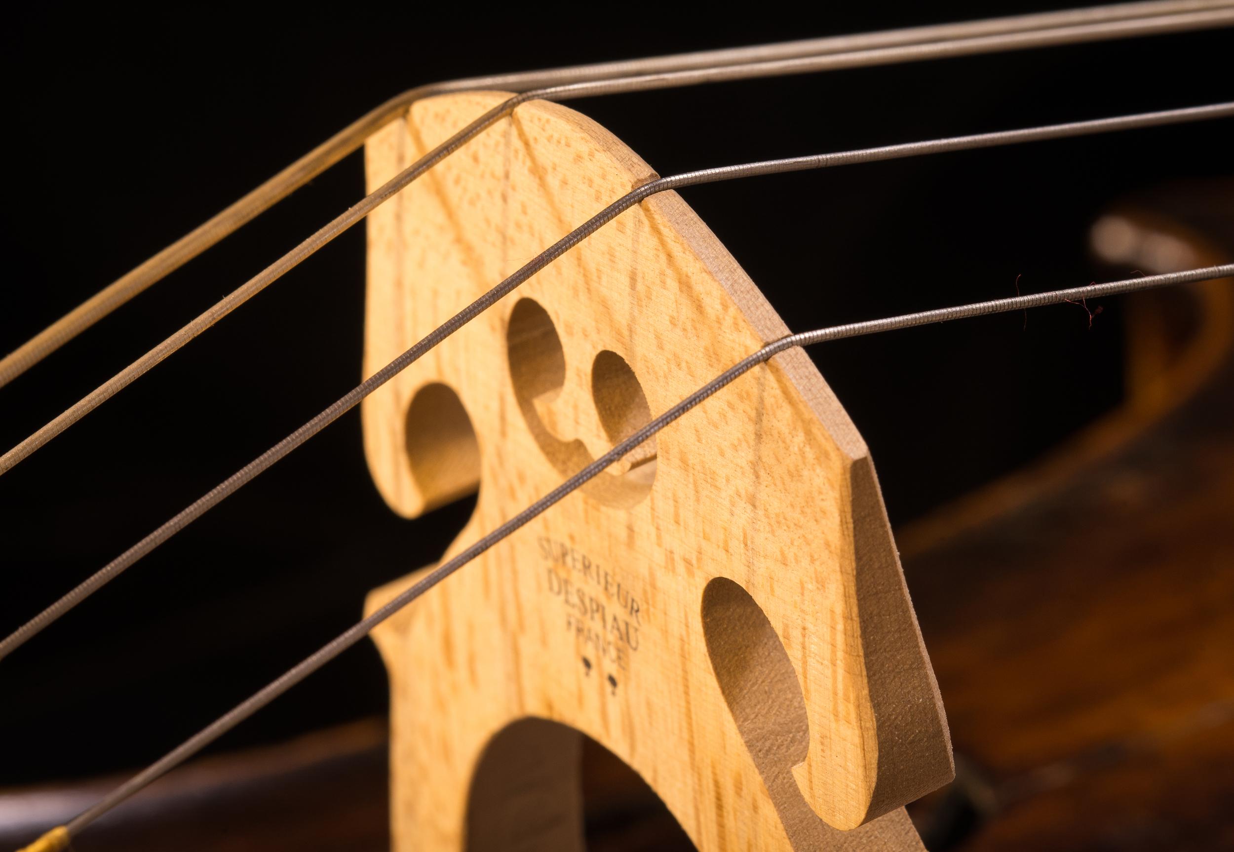 Perley Cello-38.jpg