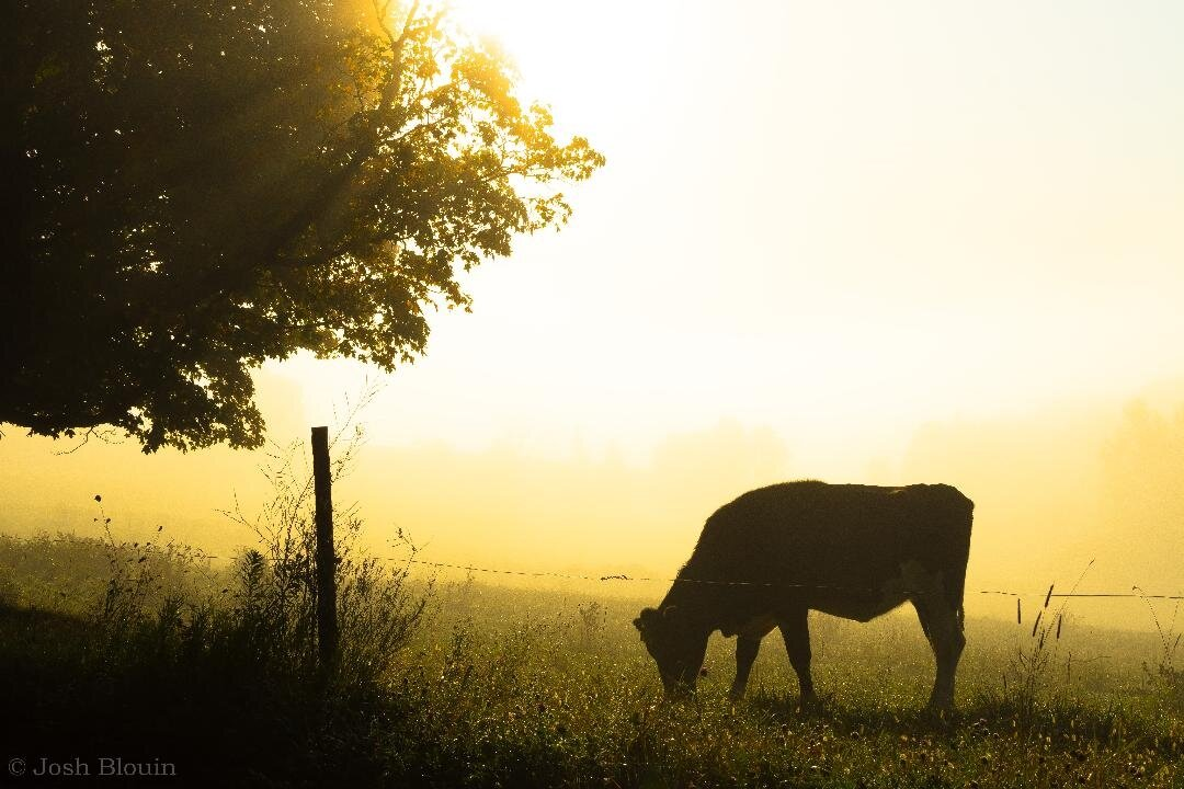 Morning Light Peacham (1).jpg