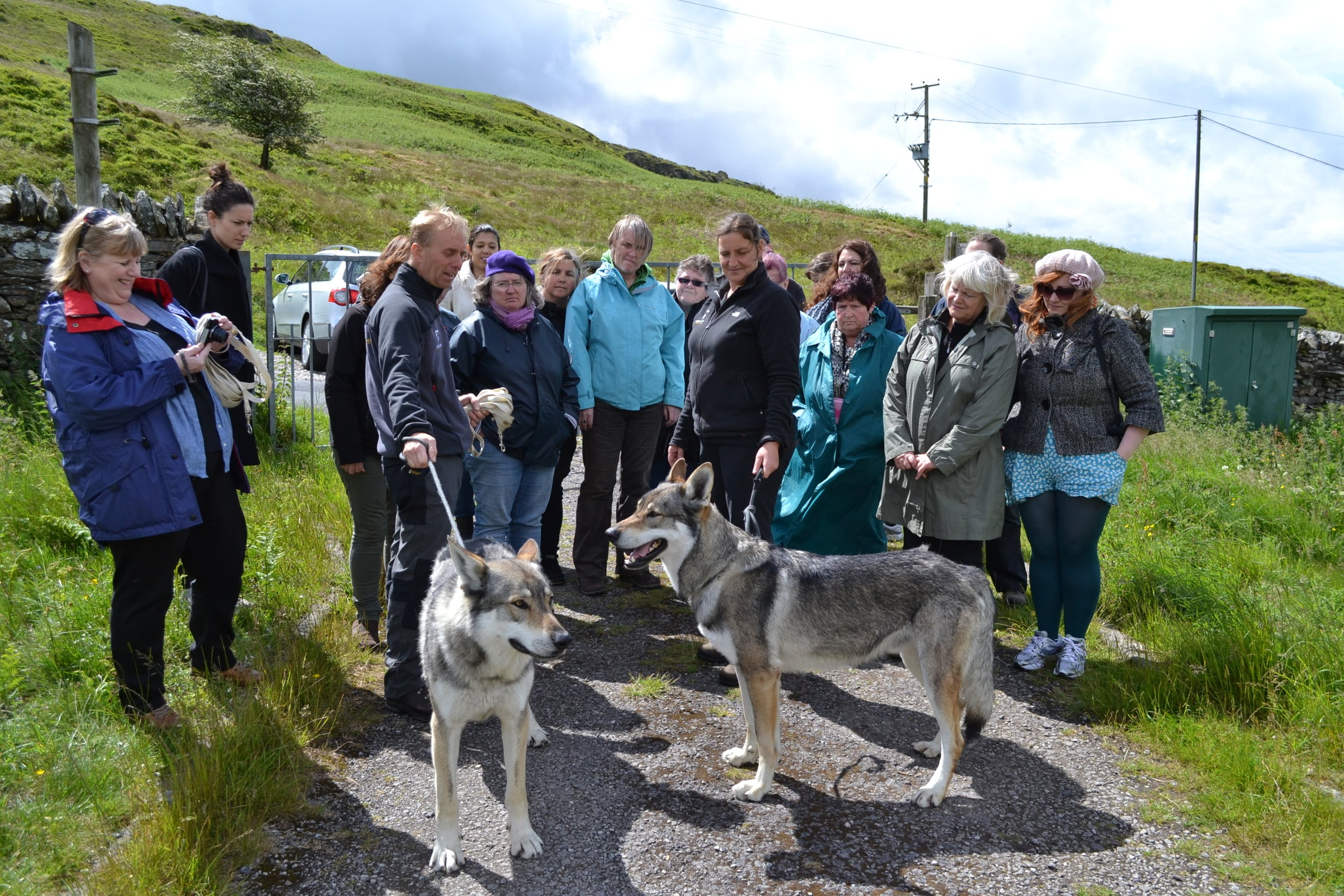 Neck of the Woods research -Walking with Wolves at Predator Experience, Cumbria. Photo: Ange Cobham for Manchester International Festival.