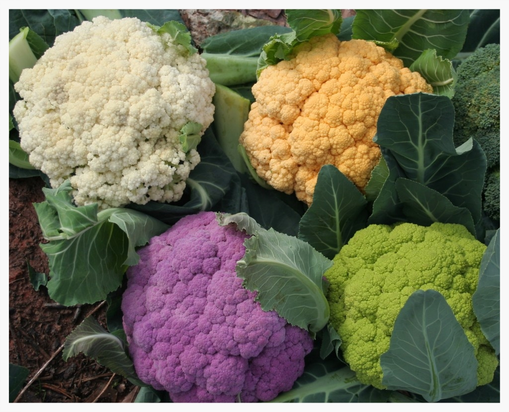 Cauliflower comes in different colors and flavors - we love them all.