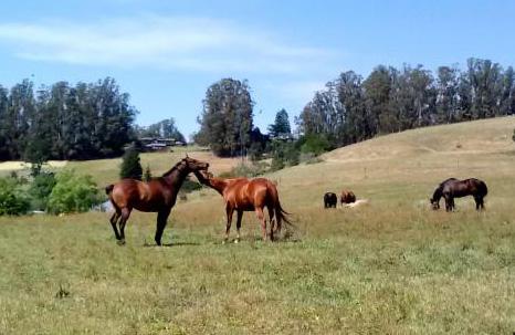 Flag Ranch      photo by Susan Blake