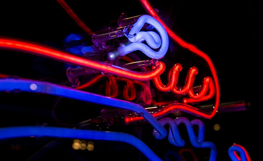 neon-electric-eel-01.jpg
