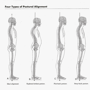 postural alignment.png