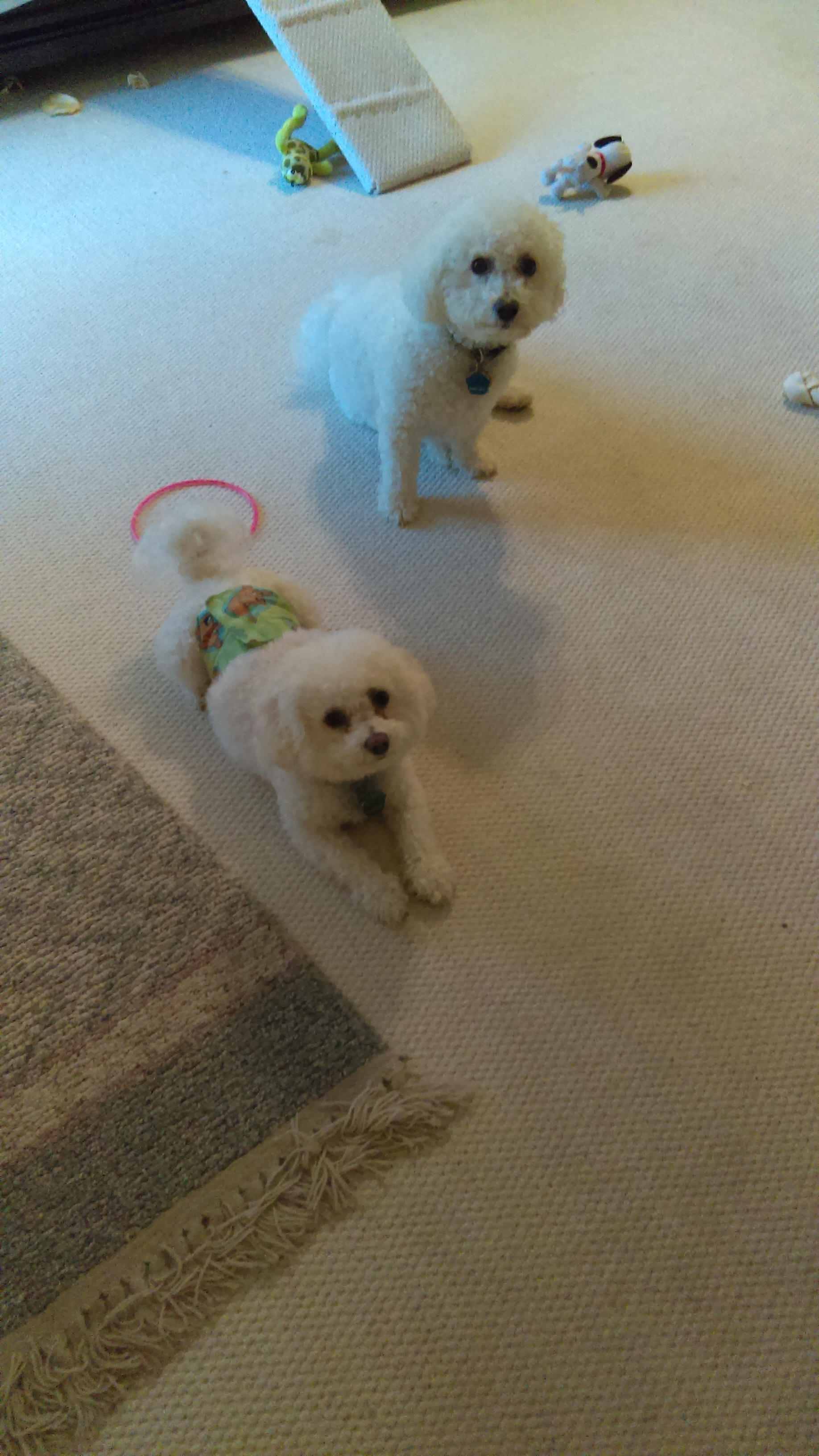 Here's Kirby and Ripley. They wear diapers.