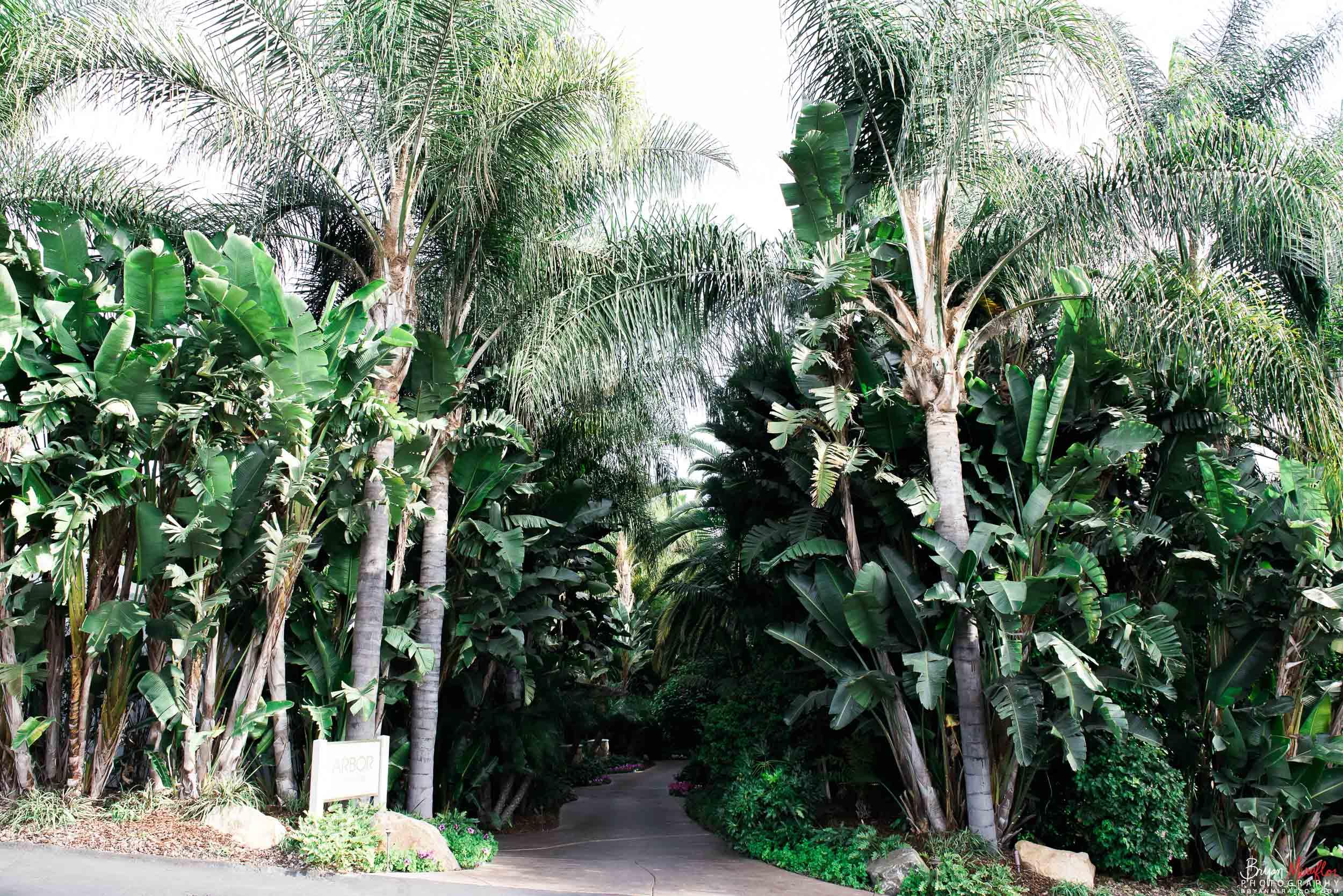Bryan-Miraflor-Photography-Hannah-Jonathan-Married-Grand-Traditions-Estate-Gardens-Fallbrook-20171222-074.jpg