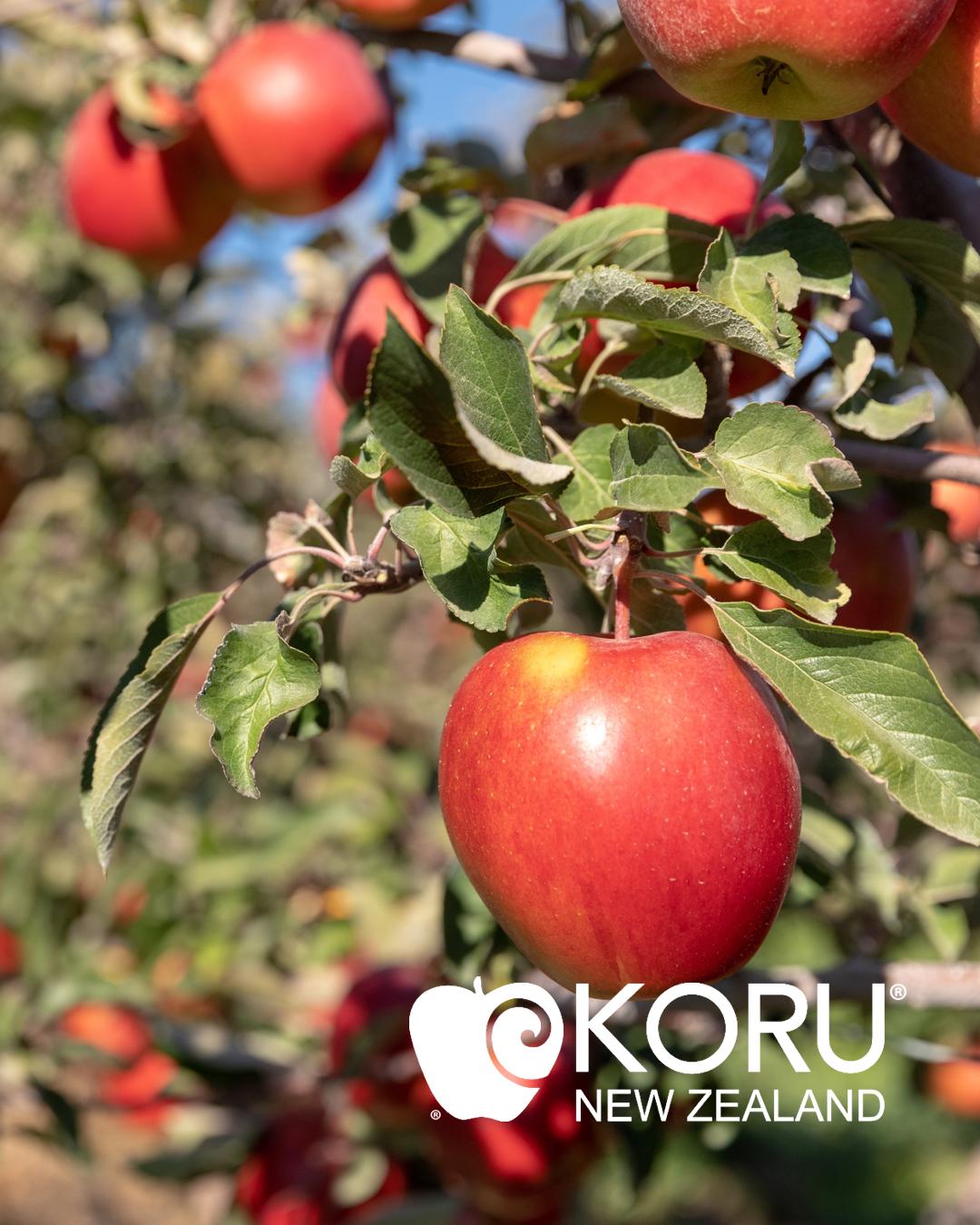 Koru_Apples_West Headshots.001.jpeg