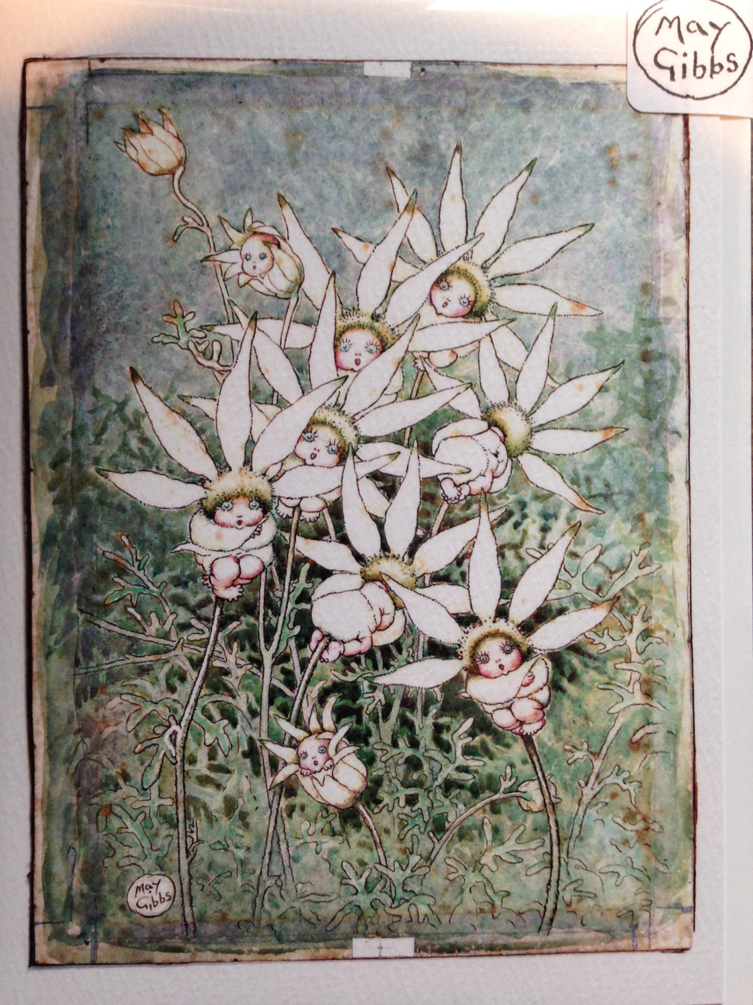 May Gibbs' beautiful artwork.