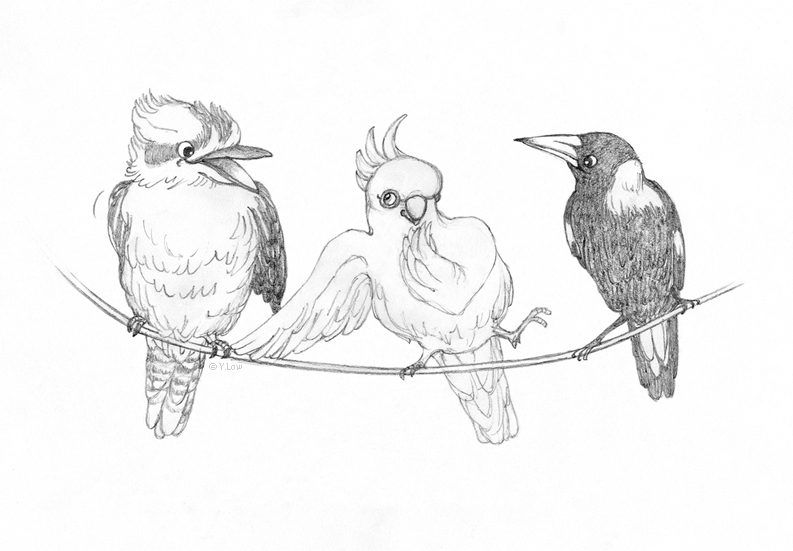 Here's my drawing, 'The Bush Telegraph' - Kookaburra, Sulphur Crested White Cockatoo and Magpie sharing some news…