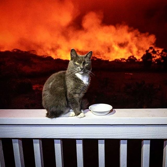 I find picture of a #cat at #volcano in #Hawaii #hilarious for some reason.