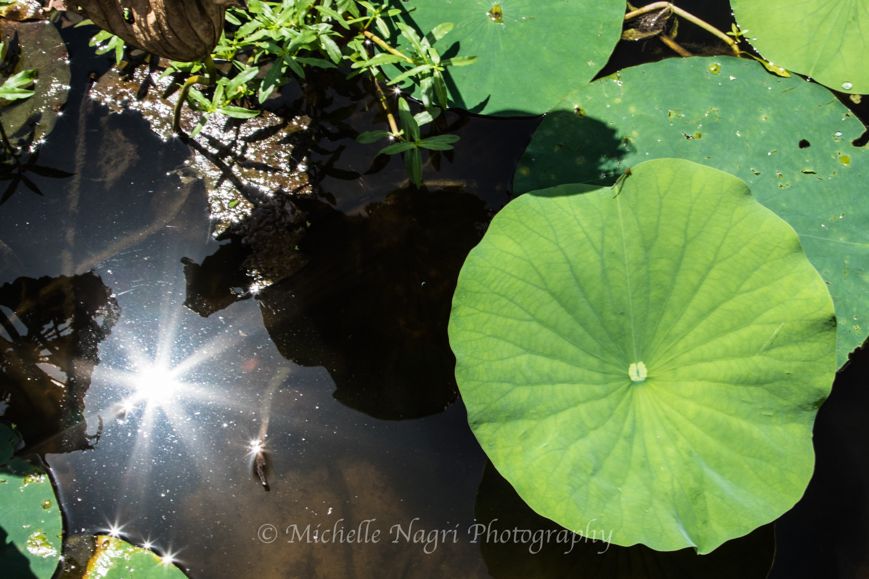 Solar Reflections