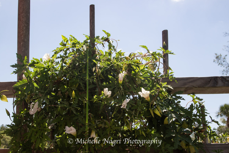 Garden at Vine