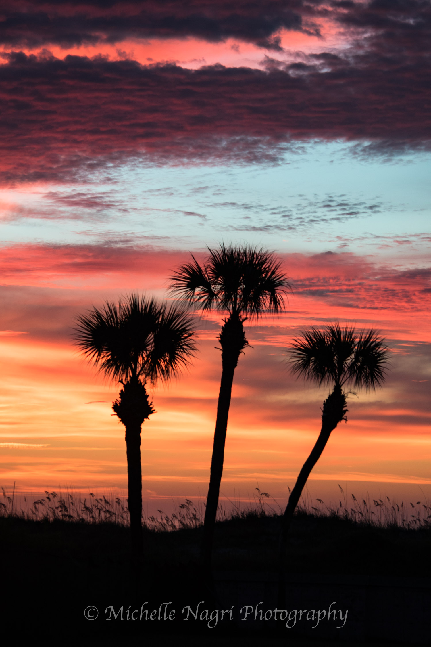 First image taken upon walking out to the beach that morning. These three palm trees had front row seats for the most amazing sunrise I've seen.
