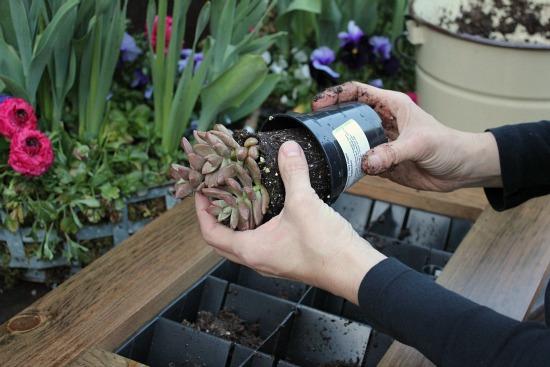 grovert-living-wall-planter-frame-DIY.jpg