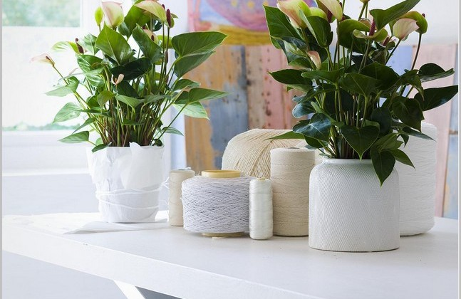 Creative-Pots-For-Indoor-Plant-With-Pattern-Pots-Ideas-647x420.jpg