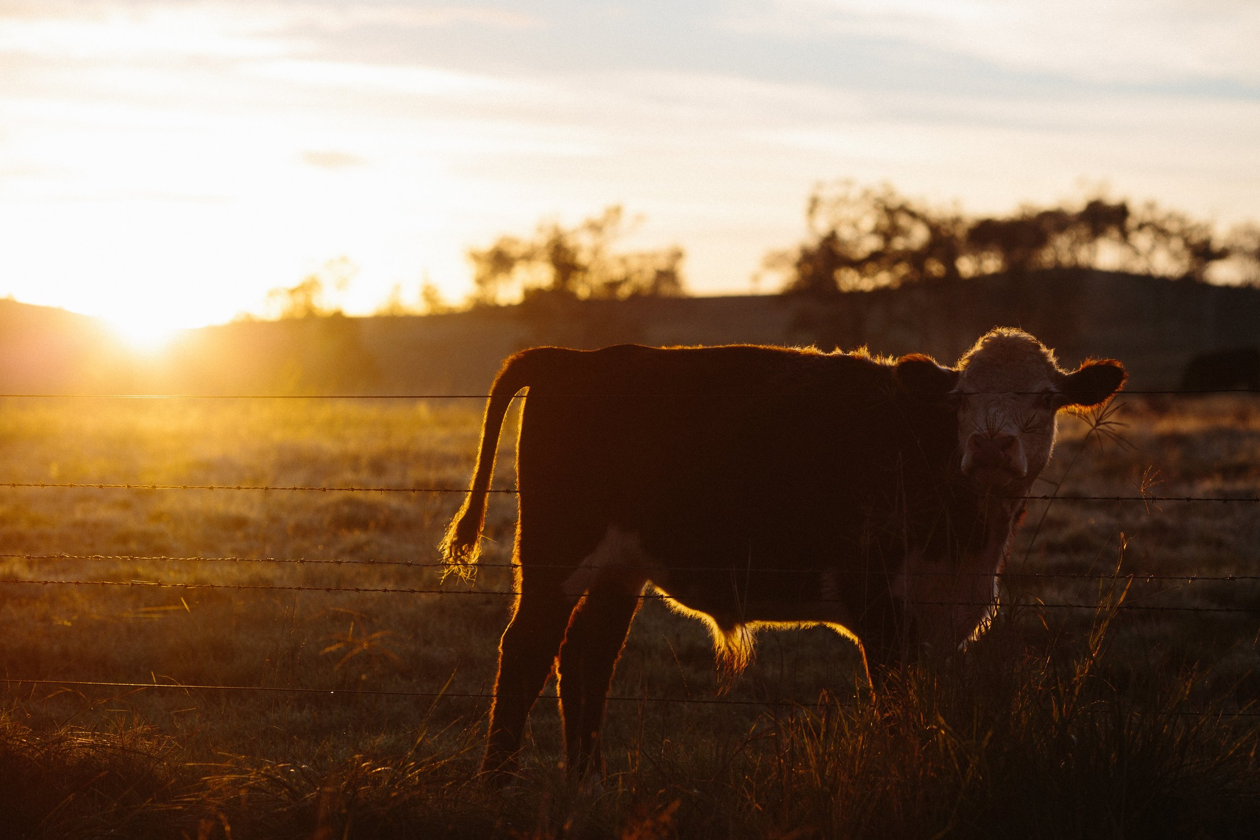 Rural Insurance -