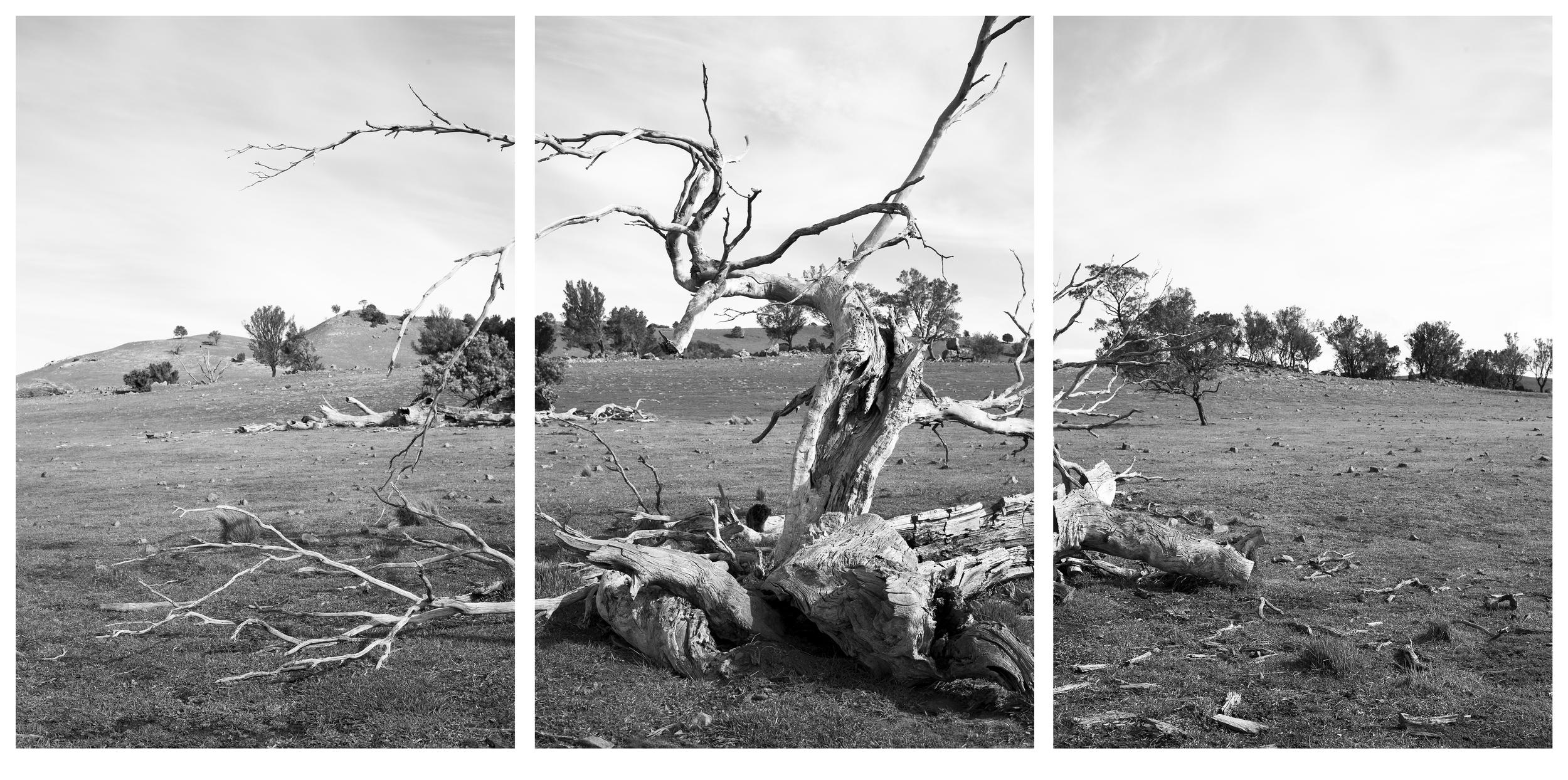 treepano2.jpg