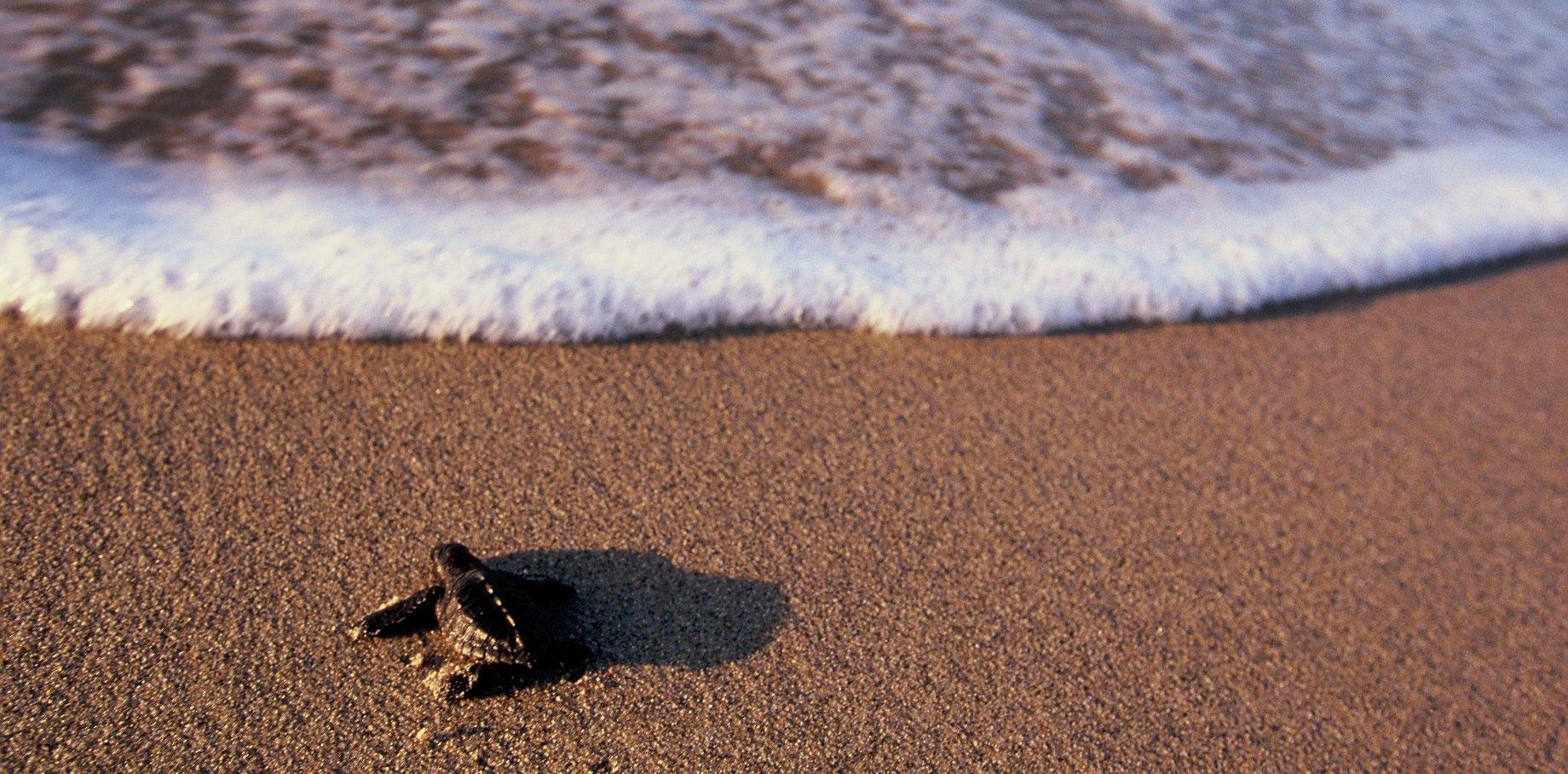 baby-shoreline.jpg