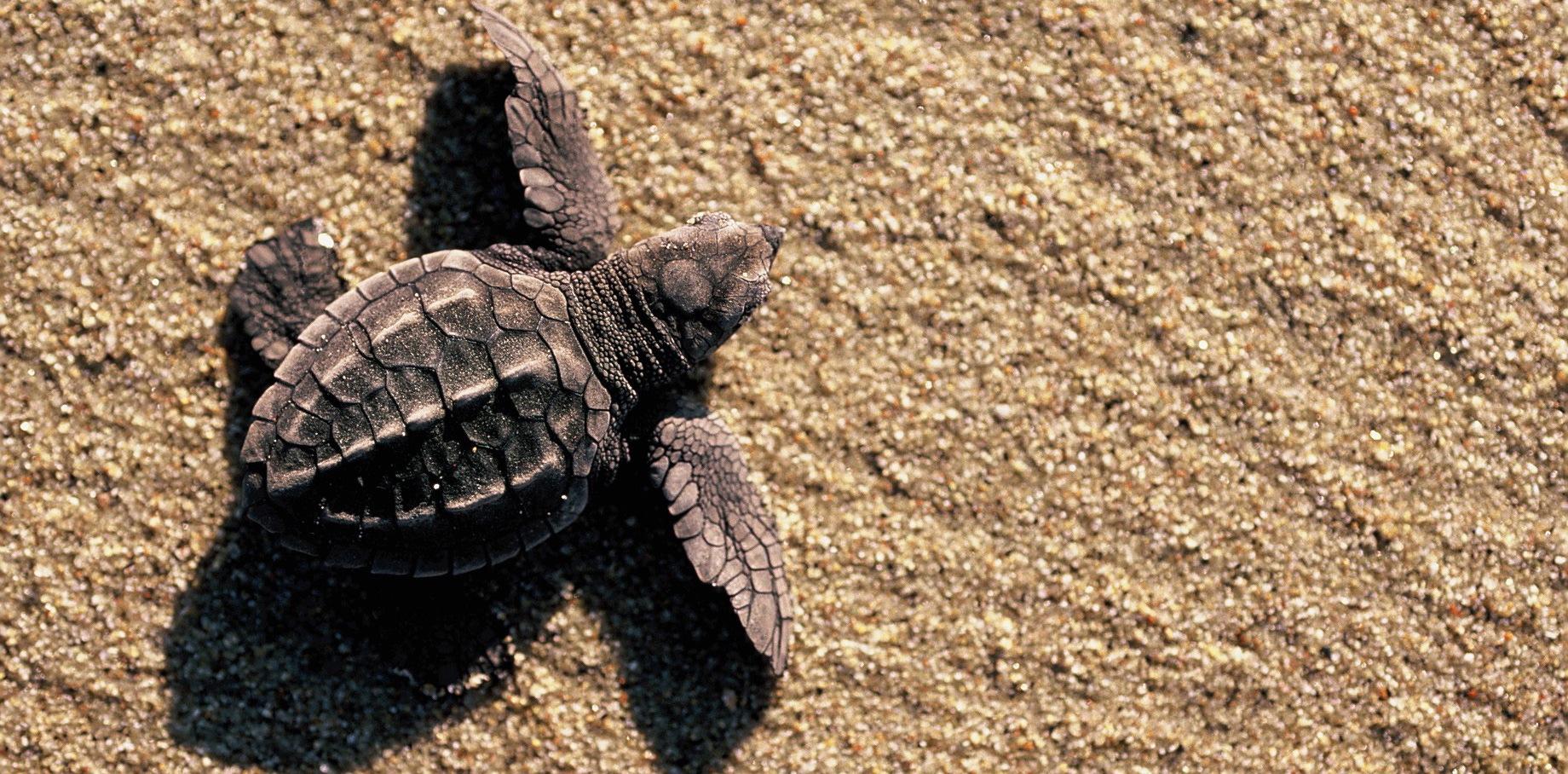 baby-turtle.jpg