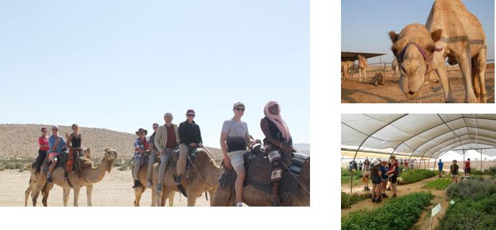 camel-day.jpg