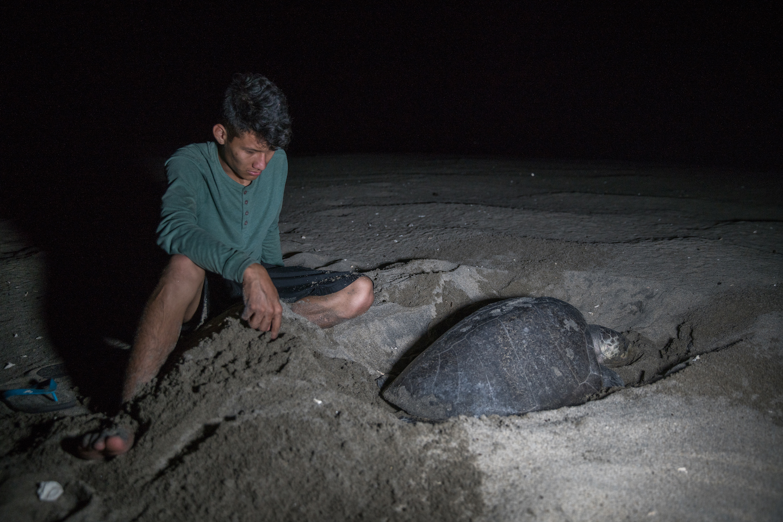 adan night turtle.JPG