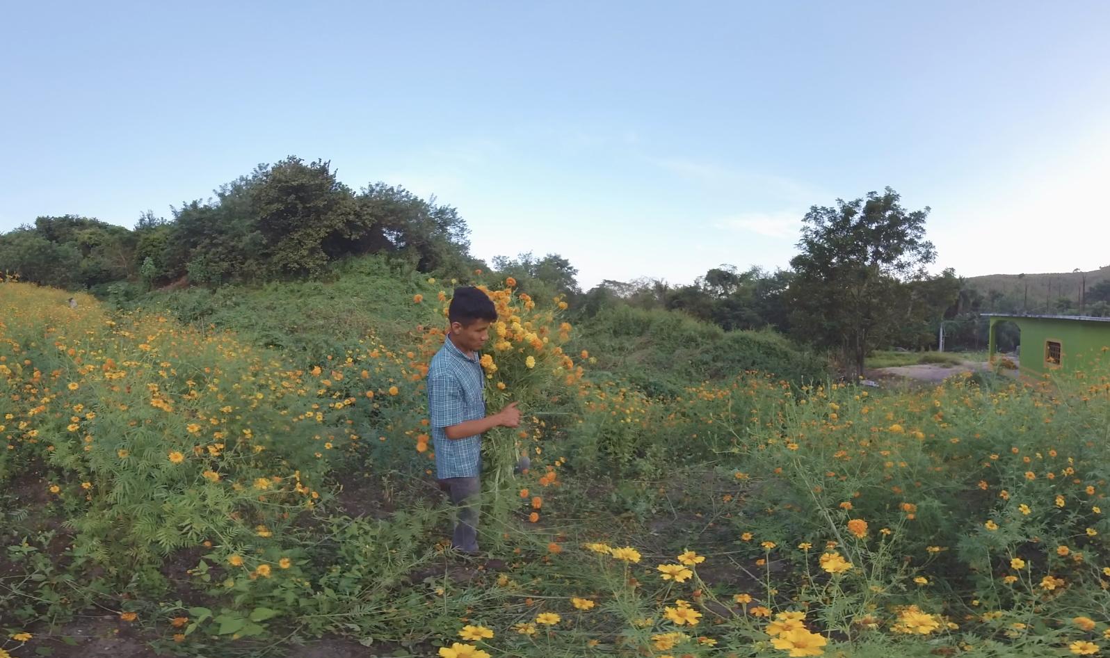 Adan Flowers.png