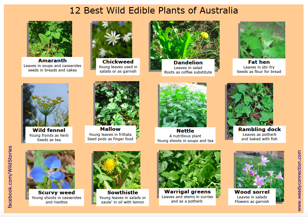 And here's a list of some of the wonders growing out there, and probably in your garden too.