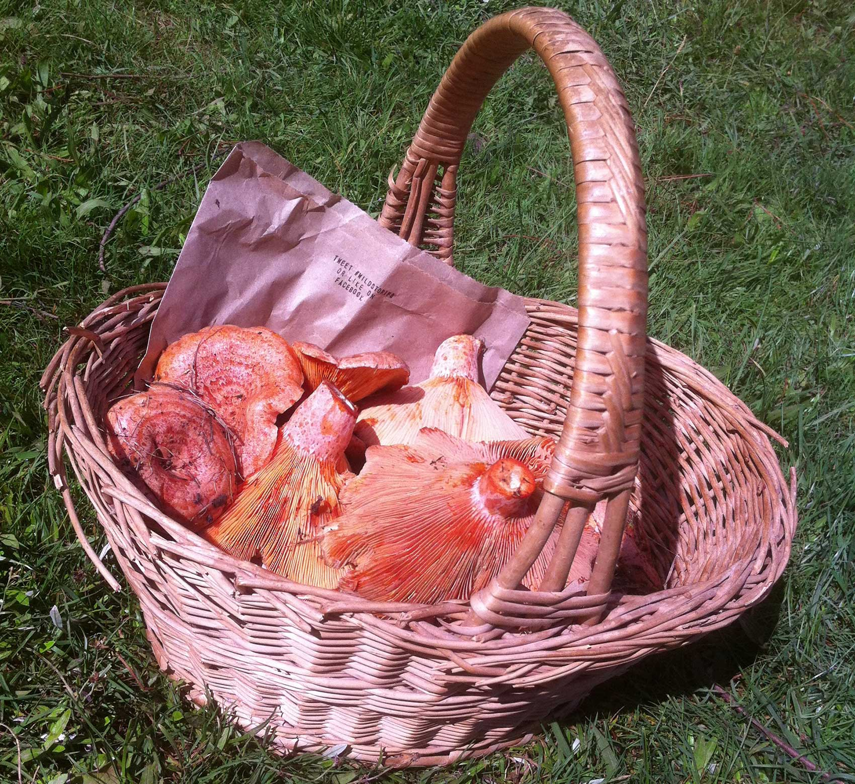 mushrooms-basket.jpg
