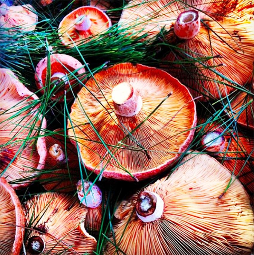 mushrooms-shot.jpg