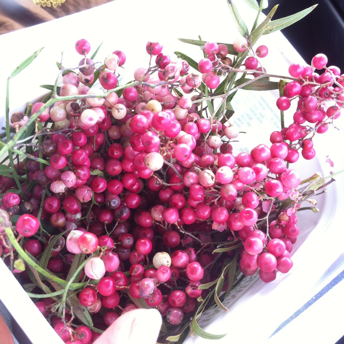 peppercorn_tree_berries.jpg