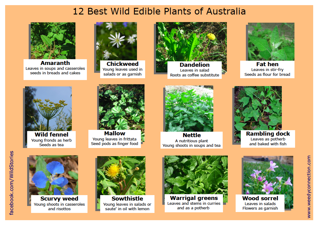 Some of the most common edible plants living and thriving on the East Coast of Australia