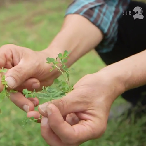 - Urban Forager: Diego Bonetto, Will Reid, The Feed, SBS2, 24 March 2015