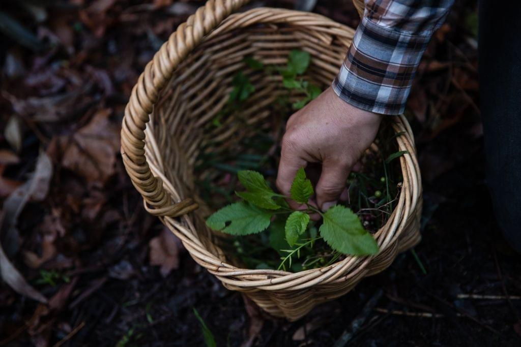 farmers friend wildfood foraging.jpg