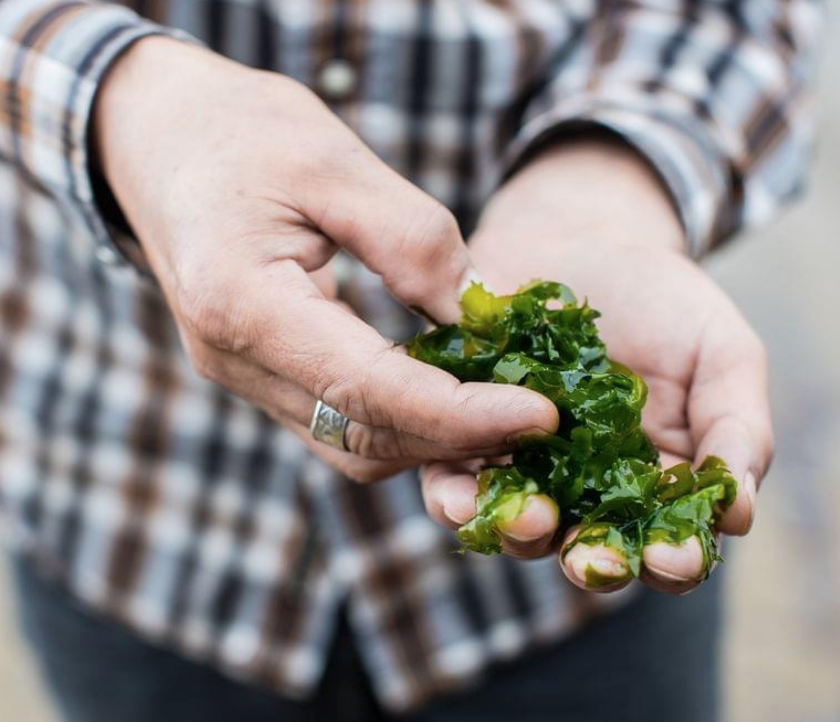 - The perks and Challenges of working with wild ingredients, Dave Withers, Archie Rose,  November 2018