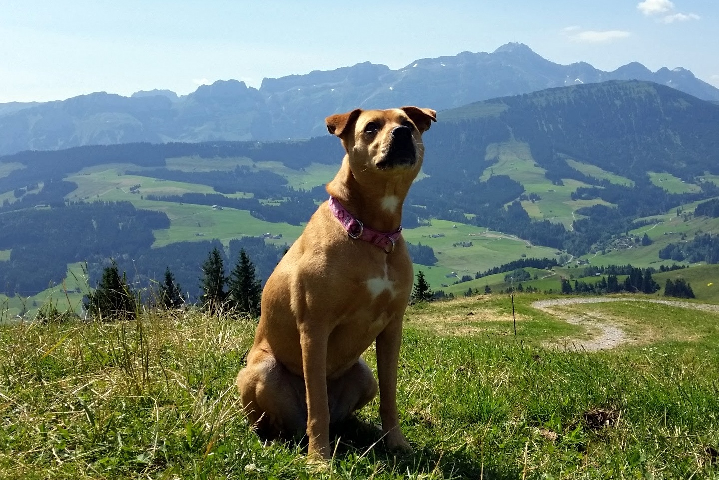 On a hike in Appenzell.This is not our neighborhood park! ;-)