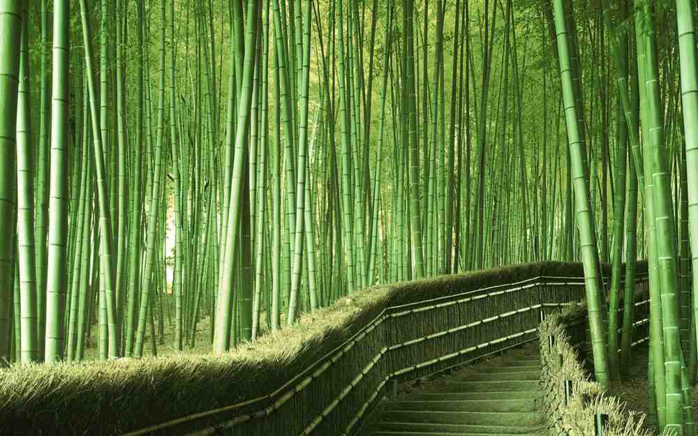 The bamboo forest in Arashiyama