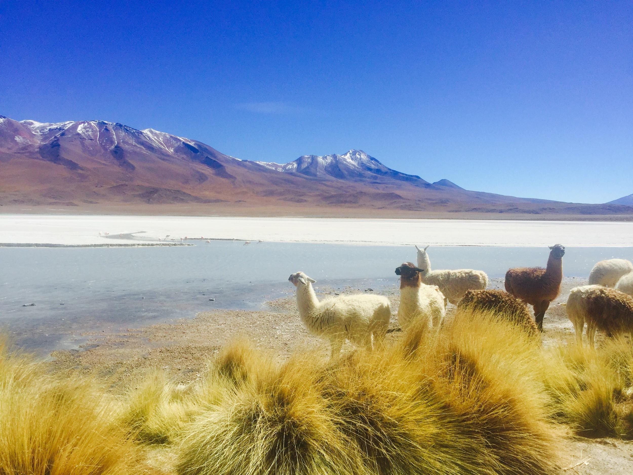 Bolivia 2.jpg