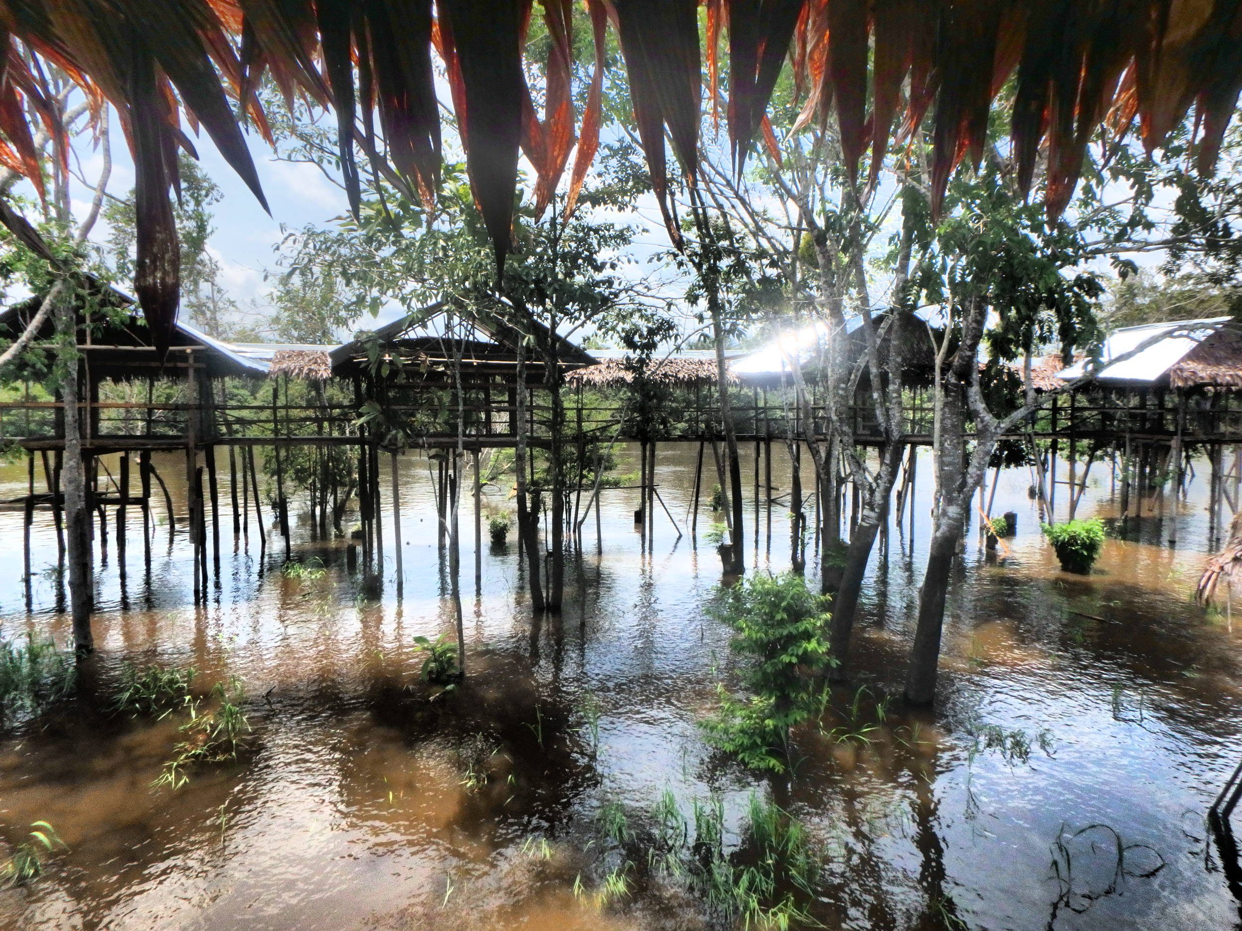 Peru_Iquitos_Amazon 3.JPG