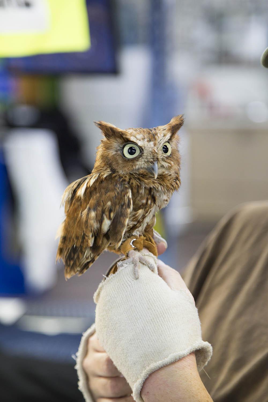 Twin-City-tees-fundraising-WSC-owl.jpg
