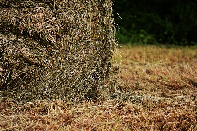hay-bales-2424209_640.jpg