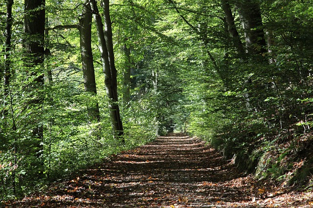 forest-path-2808216_640.jpg