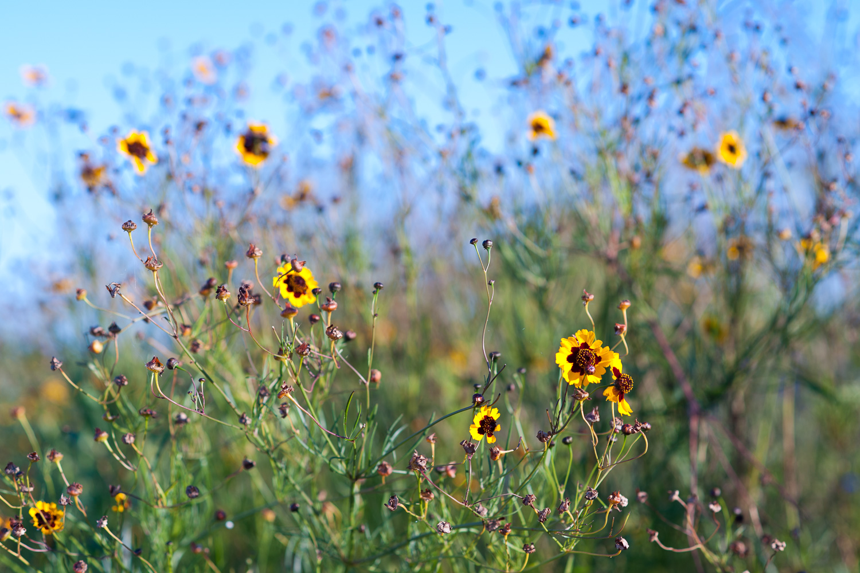 """Wildflowers"", Mason Neck State Park, VA, 2013"